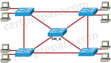 STP_root.jpg
